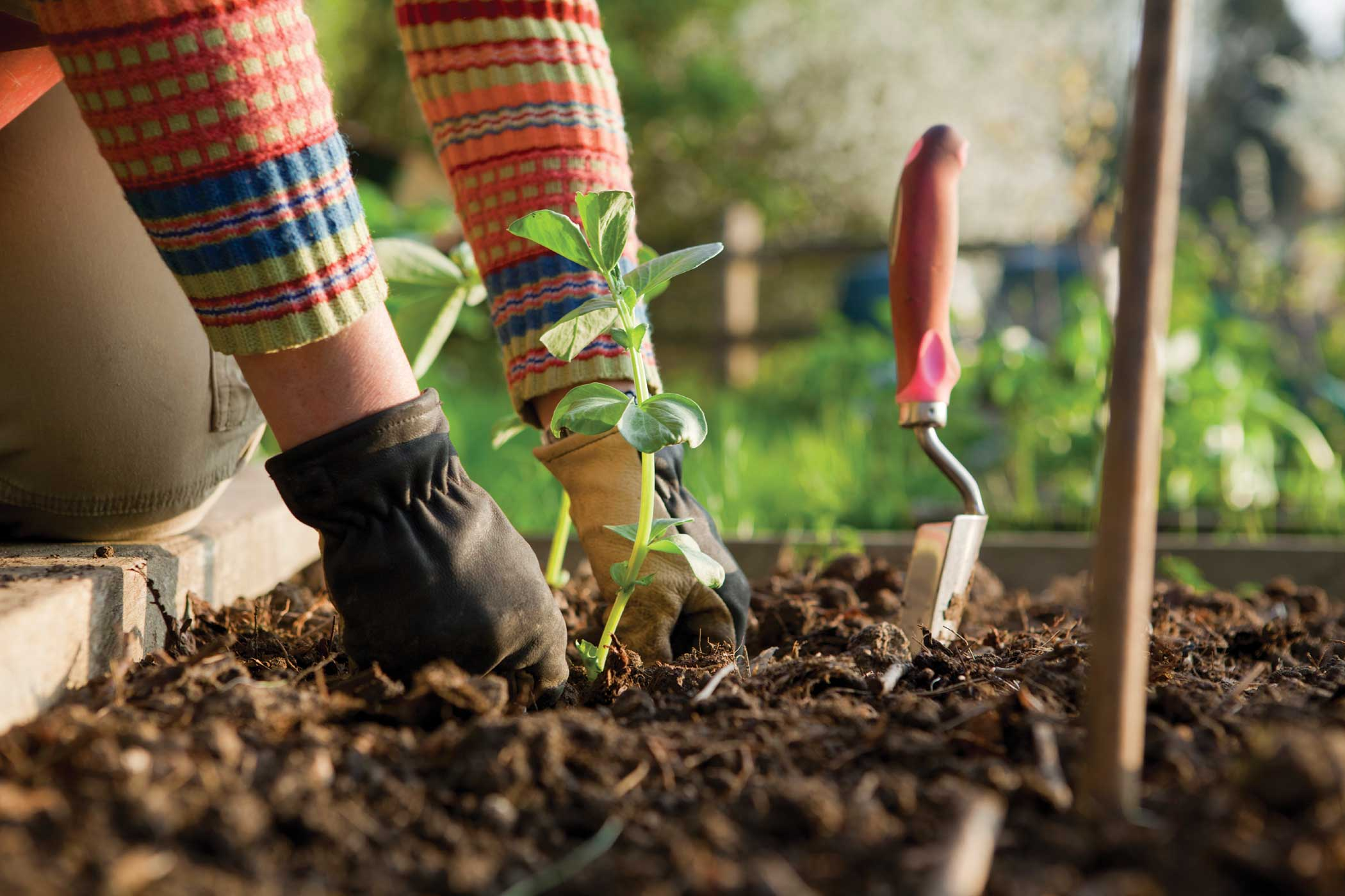 six for success smart rules for gardeners