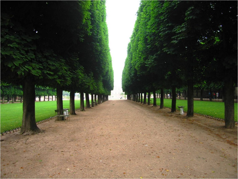 Pleached Chestnut Trees In The Luxembourg Garden Paris
